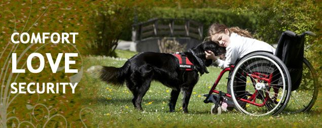 Service Dogs For People With Disabilities Service Dogs Doggie