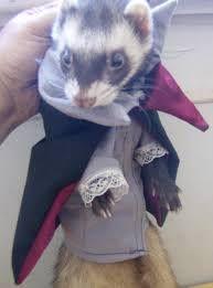 Vampire Ferret  849eb81c8b95