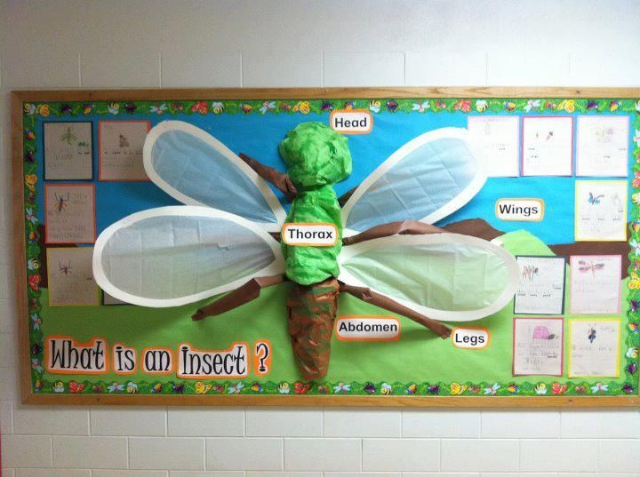 Decoraciones de display board science insect buscar con for Art and craft for classroom decoration