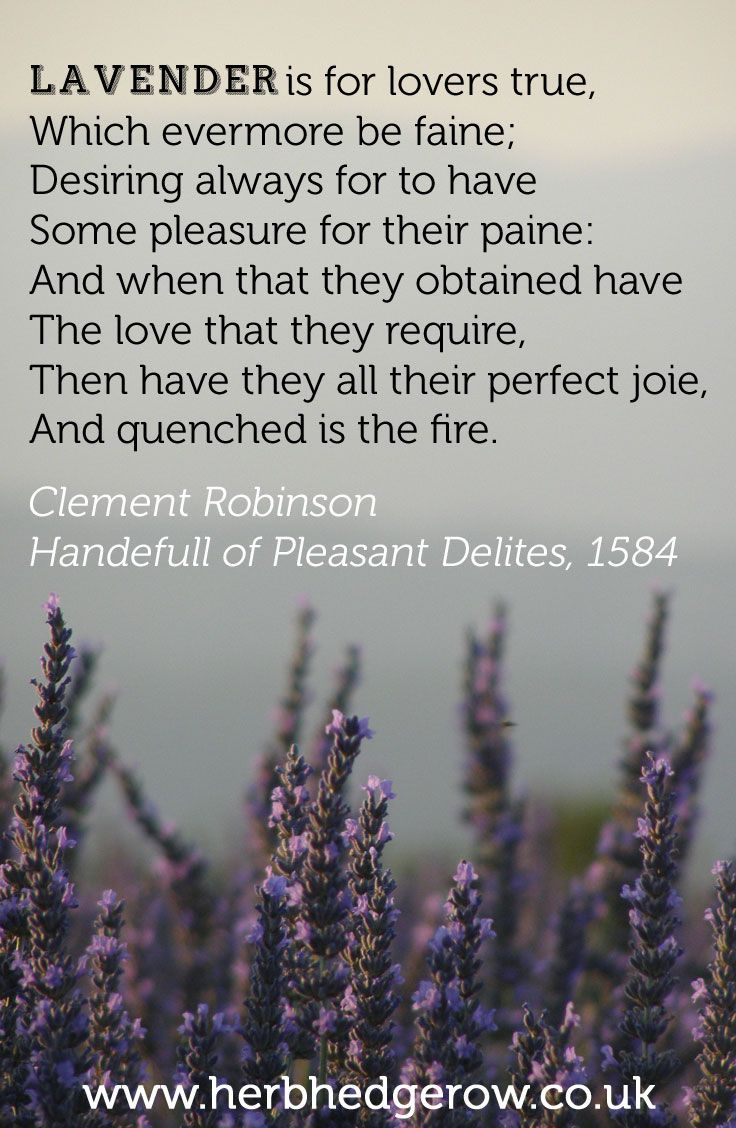 Lavender Is For Lovers True Google Search Lavender Quotes Herbalism Lavender
