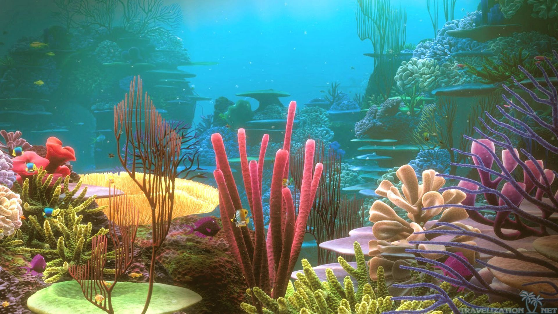 under water coral reef wallpaper wallpaper source coloring