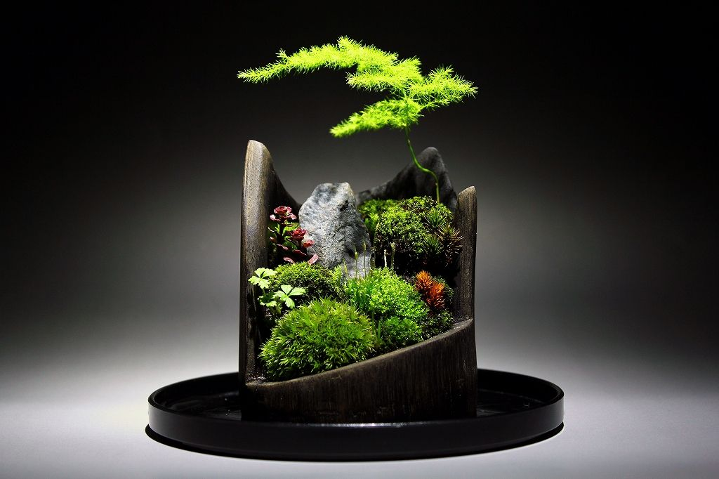 1 dream garden moss bonsai pinterest. Black Bedroom Furniture Sets. Home Design Ideas
