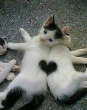 Photo of TOP 51 funny cats and kittens pictures Funny animals, funny cat |