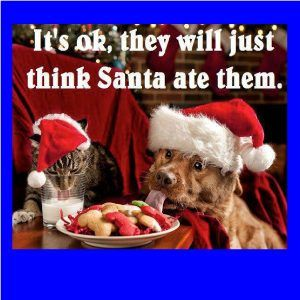 Funny Christmas Memes Clean Funny Christmas Pictures Christmas Animals Pet Holiday