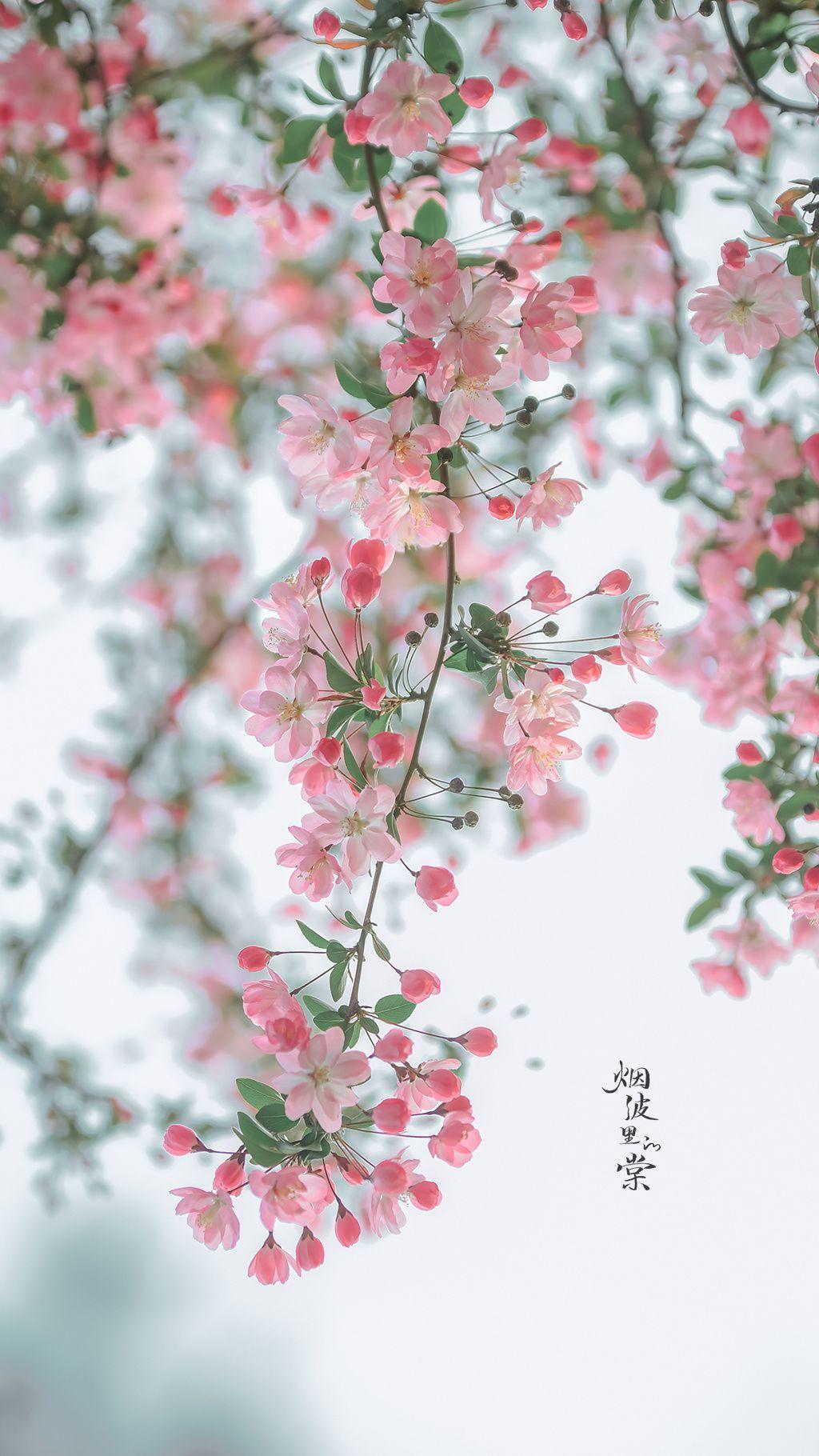 Hình nền hoa đẹp