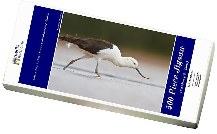 Jigsaw Puzzle-Andean Avocet (Recurvirostra andina) foraging, Bolivia-500 Piece Jigsaw Puzzle made to order