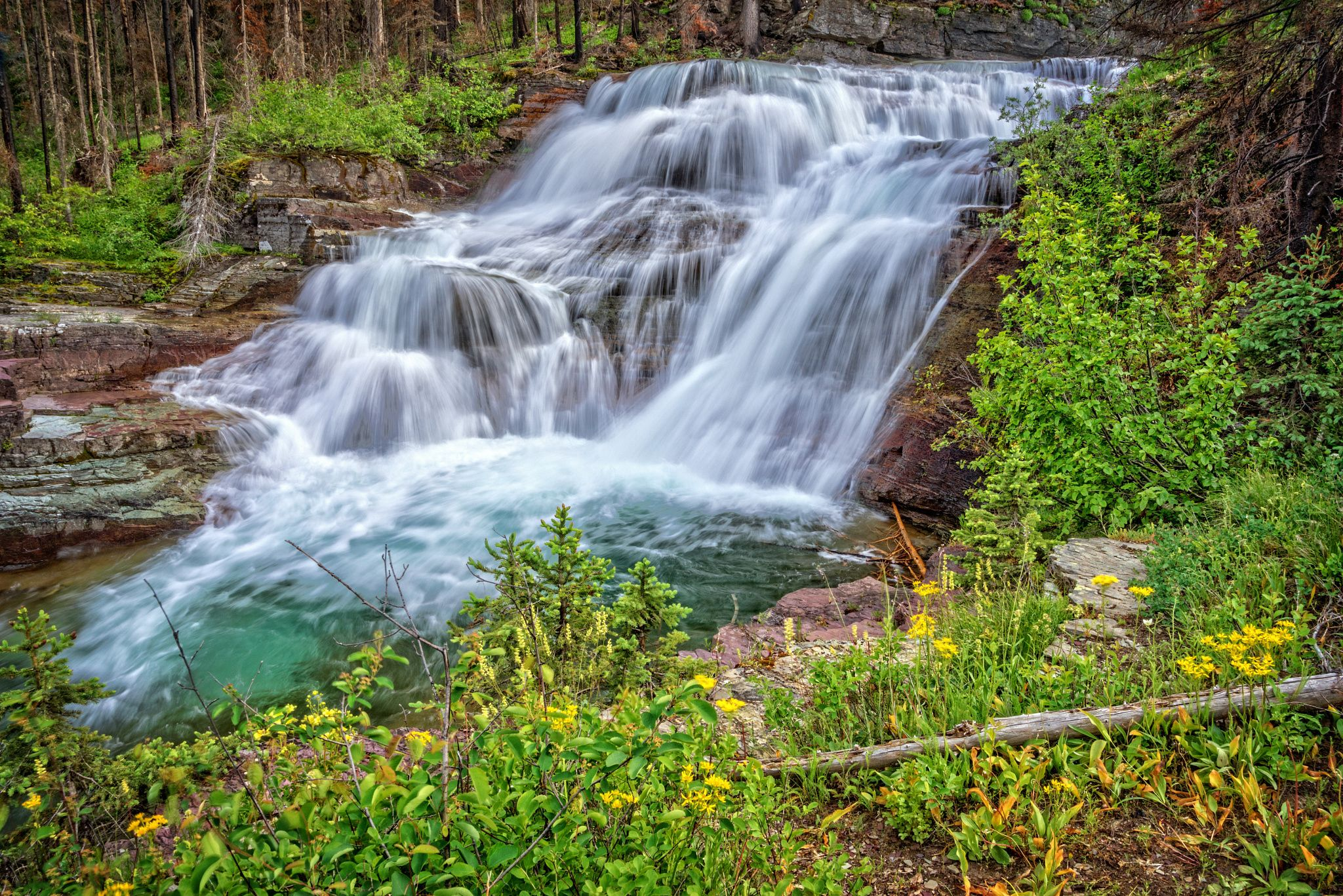 Small Falls on Virgina Creek - Small falls and wildflowers on Virginia Creek in Glacier National Park, Montana.