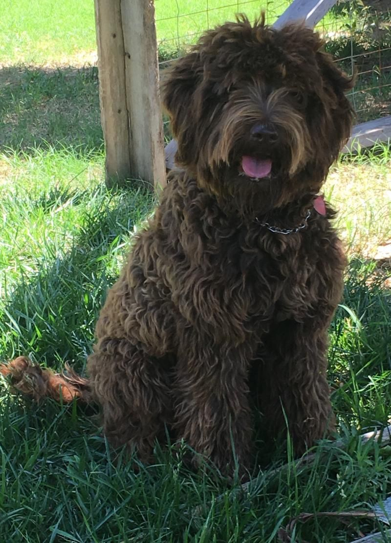 Doodles with images goldendoodle