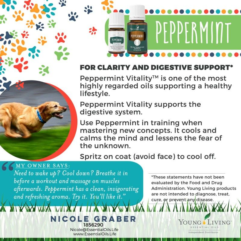Pin On Healing Energy For Dogs Homeopathy And Essential Oils