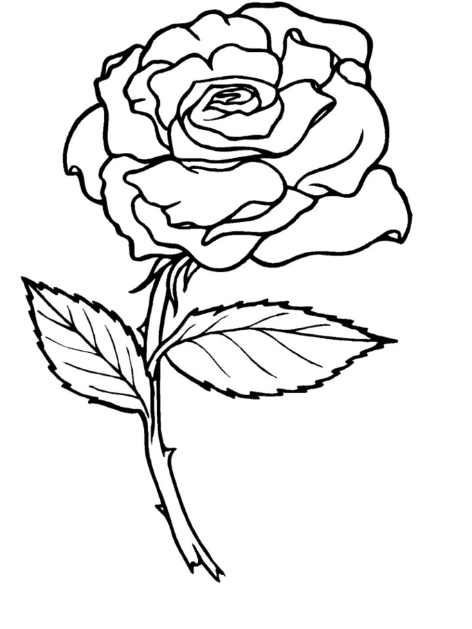 Coloring Roses Pictures