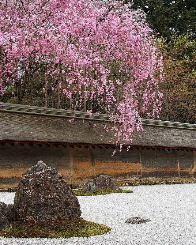 65 Philosophic Zen Garden Designs: 龍安寺 - 石庭と枝垂れ桜 / Ryoanji Cherry Blossoms