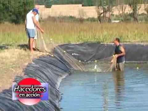 estanques caseros de agua para peces en el jard On criadero de peces casero