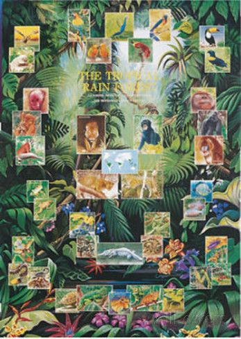 Tropical Rainforest Animal And Plant Chart Poster Poster