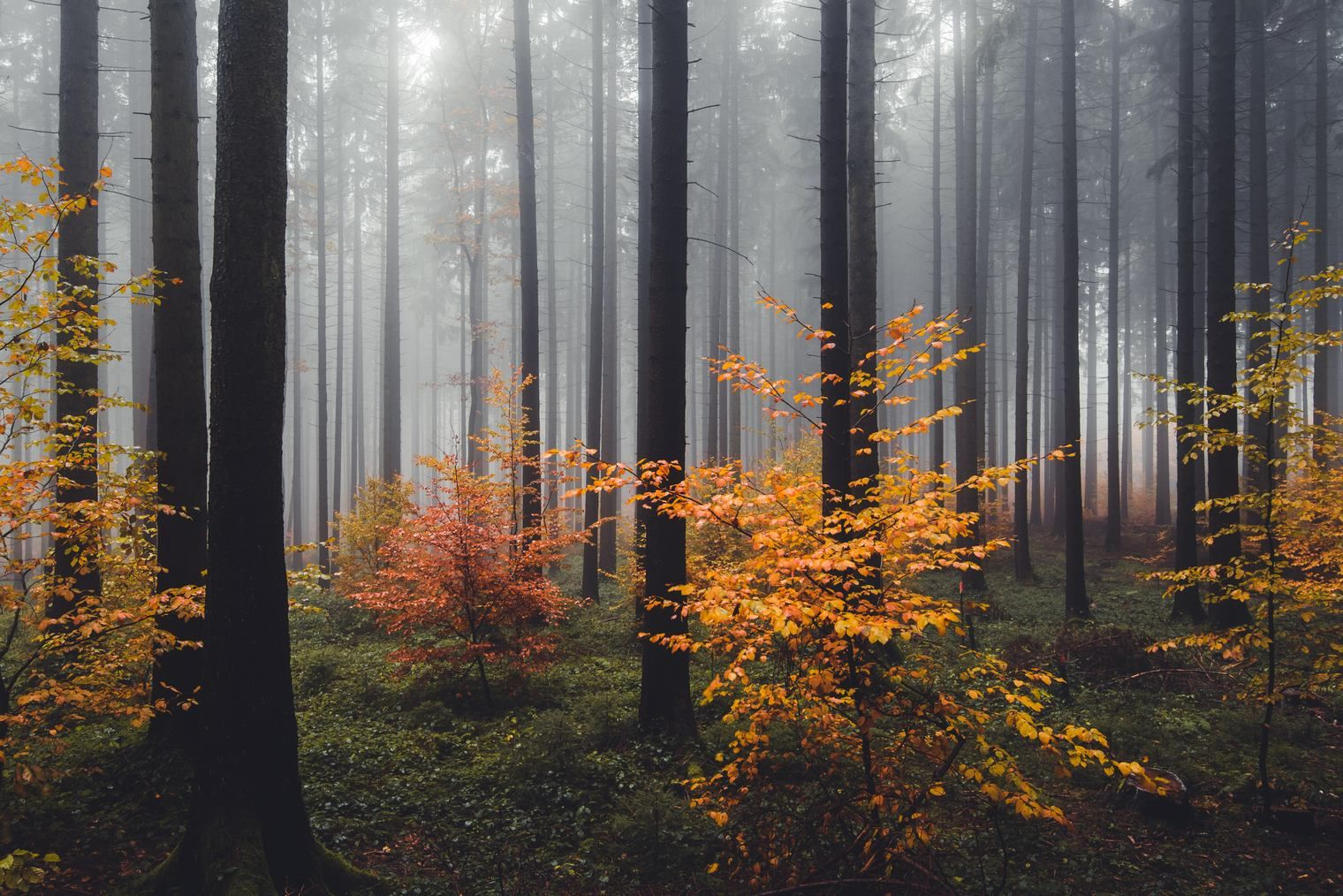 Free Autumn Forest Lightroom Presets With Images Landscape Photography Forest Photography Lightroom