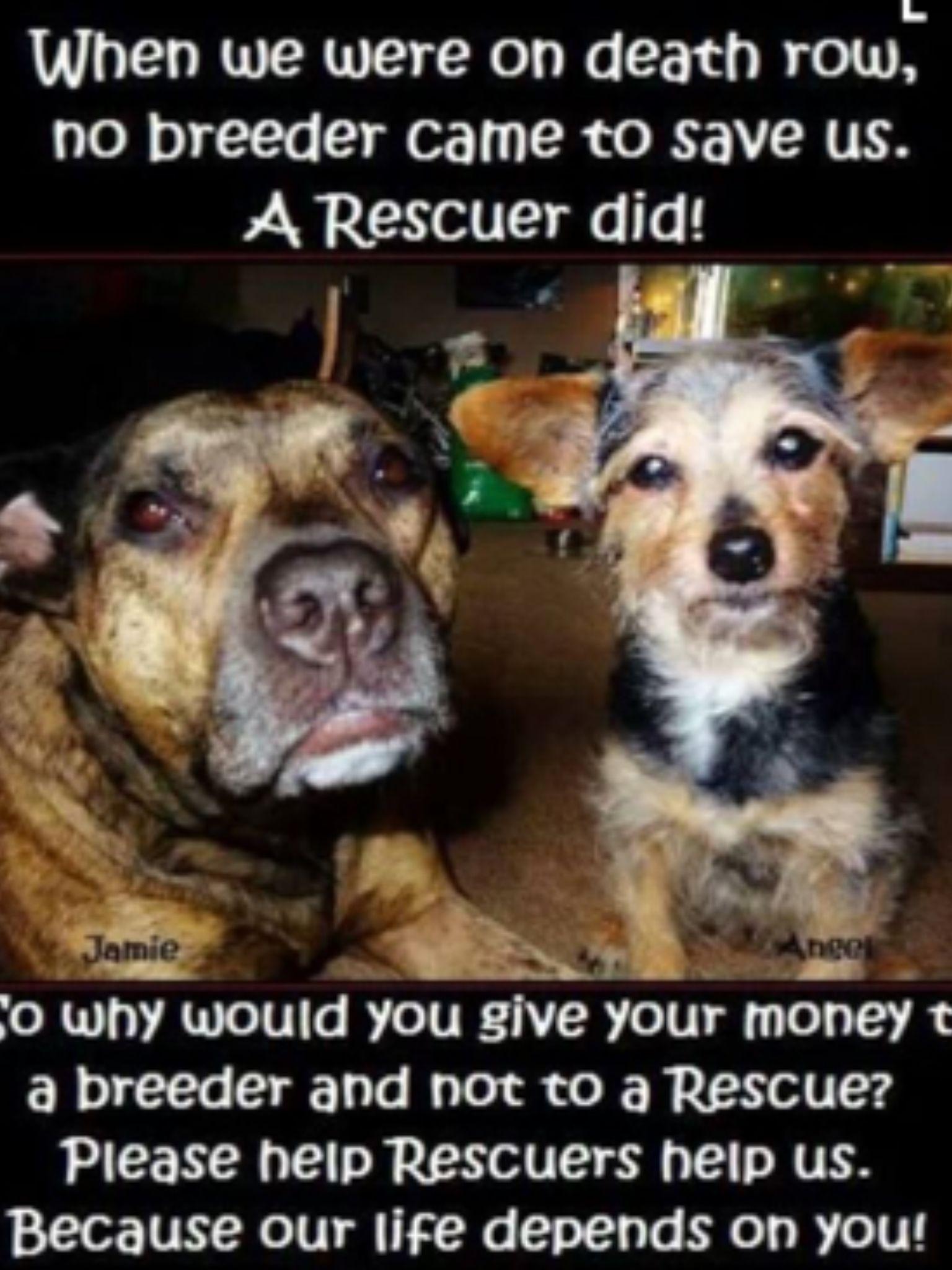 Please Rescue!