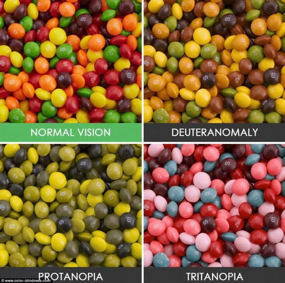 Image result for what do color blind people see? | Color blind, Color  vision, Color