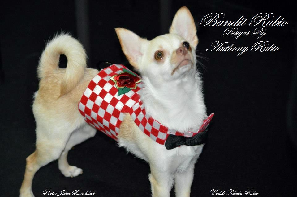 Couture Dog Of New York Kimba In A Red Checkered Harness Vest Featuring Tattoo Art By Top Pet Couturier Anthony Rubio Chihuahua Love Dog Clothes Dogs