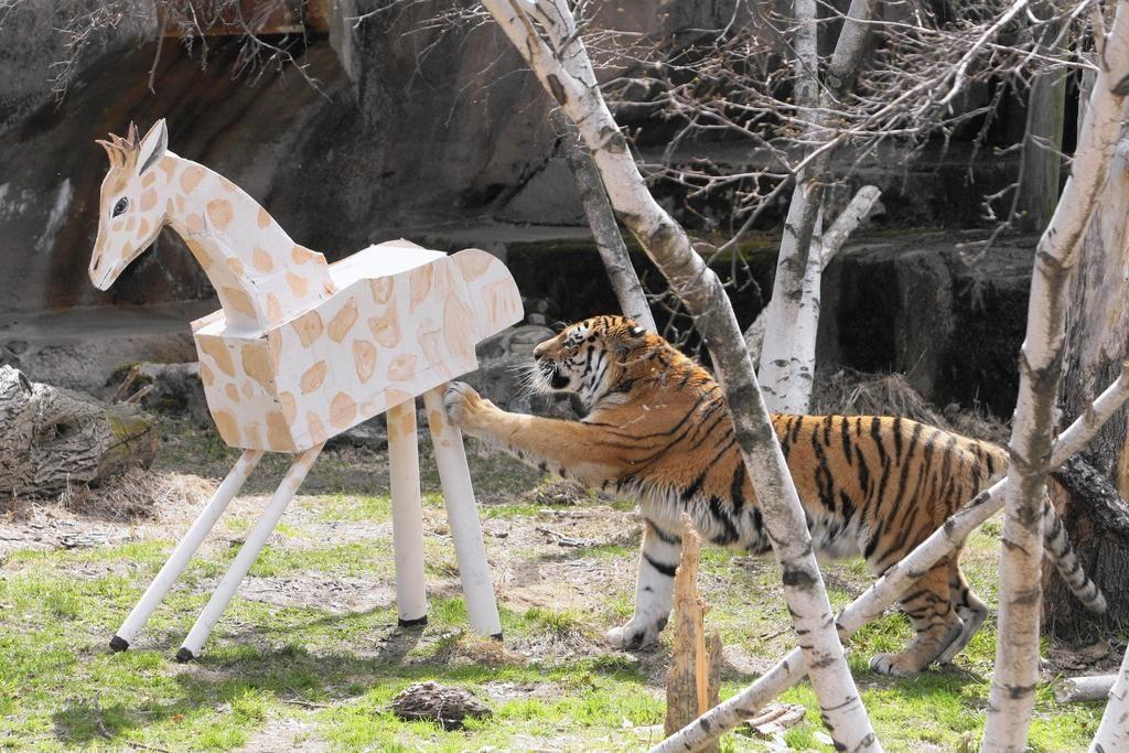 Cinco De Mayo Piñata Party At Lincoln Park Zoo For Zoo