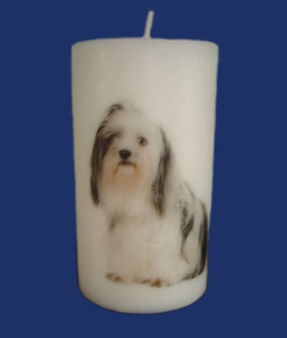 Printed Candle, Old English Sheepdog