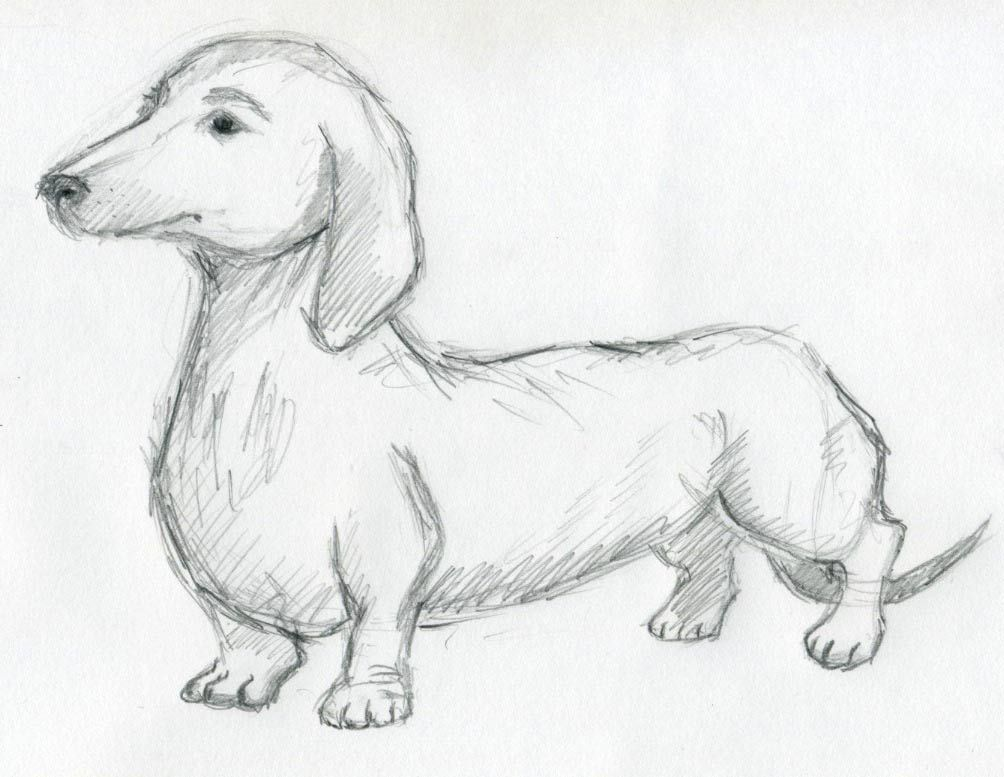 Dog Sketches For Inspiration Con Imagenes Dibujos Dibujo De
