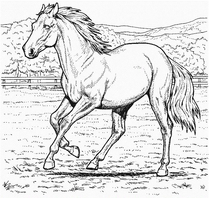 Ausmalbilder Pferde Am Strand | Ausmalbilder pferde ...