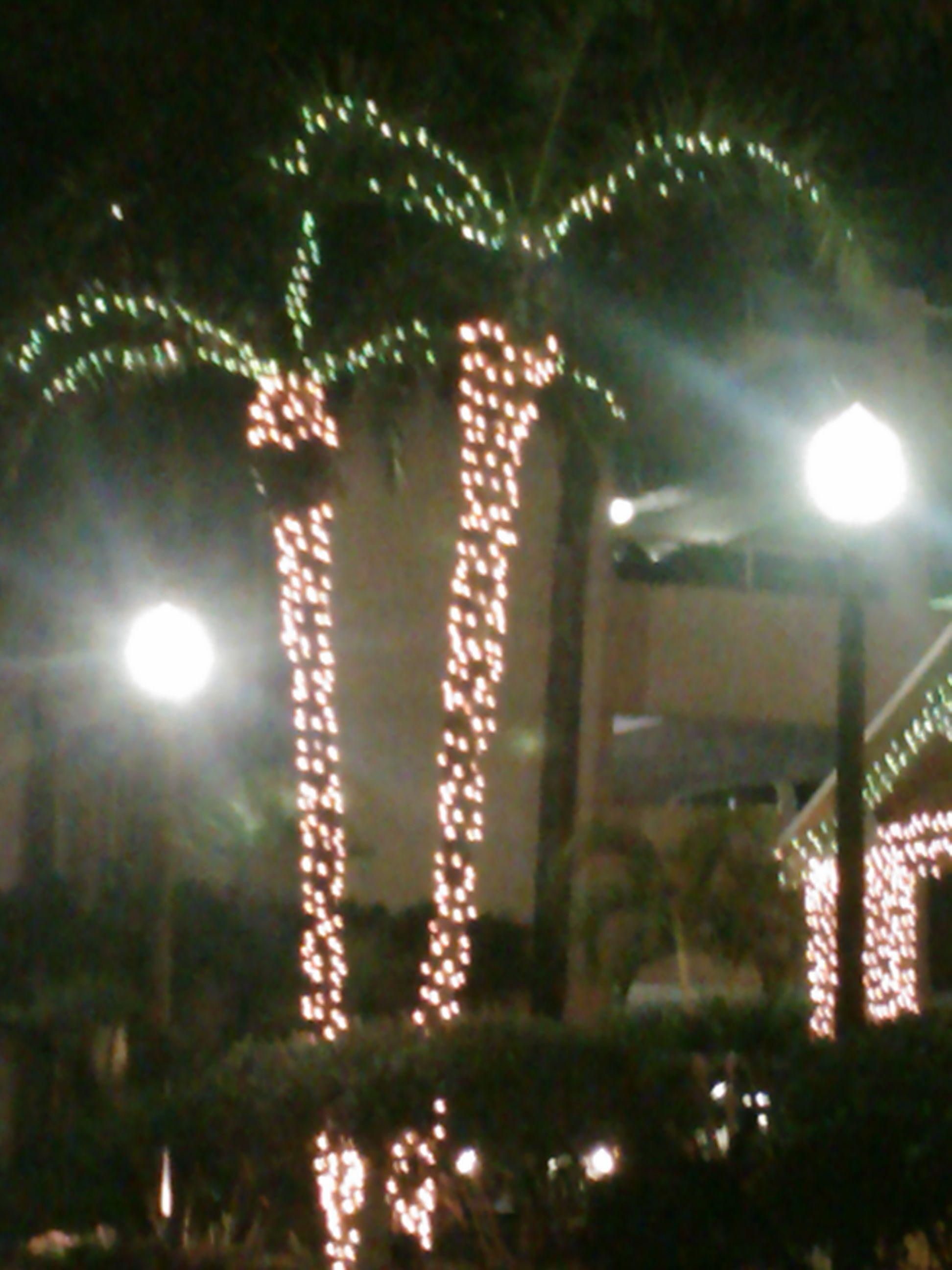 Christmas in Key West | Christmas in Key West | Pinterest | Key west ...