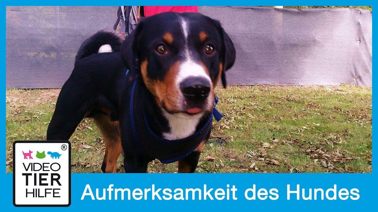 Aufmerksamkeit Seines Hundes Gewinnen Hundetraining Nach Martin
