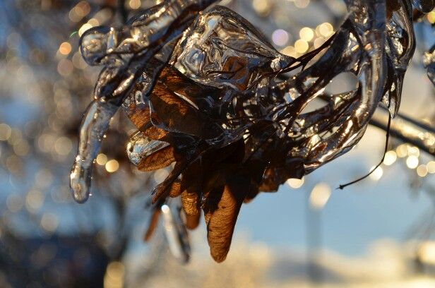 """""""Frozen in time""""-photographed by: Jewel Jes. Left overs from the ice storm in Canada. Enjoyed taking pictures today of frozen life in and around the neighborhood i live in."""