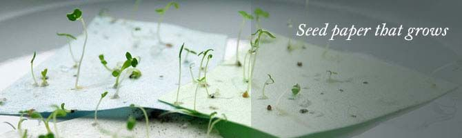 Write Thank You S On This Plant Paper Then The Paper Can Be Planted