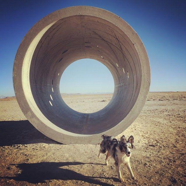 Mini Aussie Running: One Zillion Photos of Pure Joy | Trail Stoke