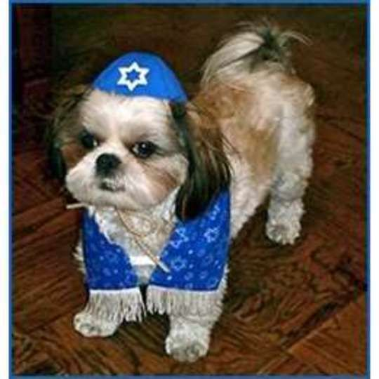 Pet Couture Yarmulke And Tallis For Your Dog Dogs Your Dog Pets