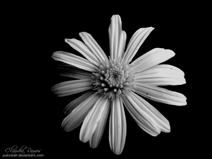 Black and white flowers looking very good in these photographs you black and white flowers looking very good in these photographs you can check yourself description from photographyheat mightylinksfo