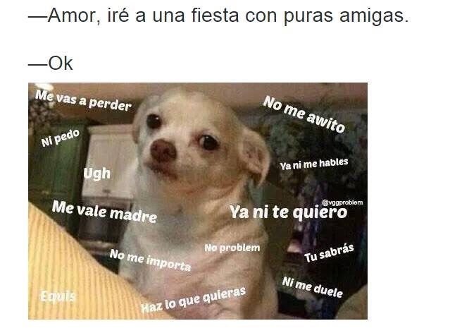 Pin By Emma F On Funny Chihuahua Memes Perros