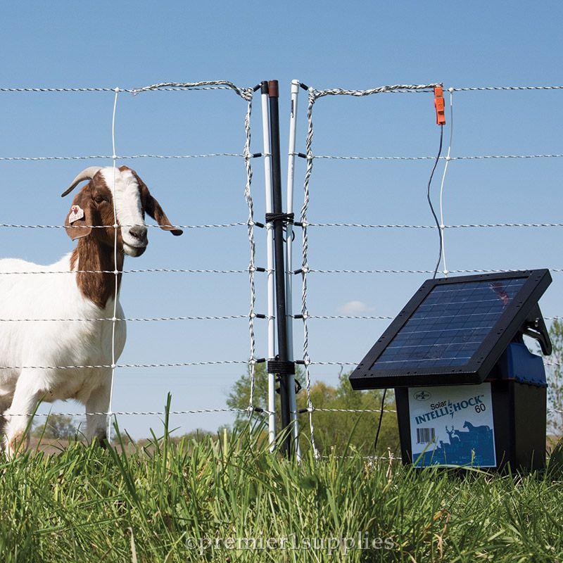 Solar IntelliShock® 60 Energizer & Kit | Fences that Work