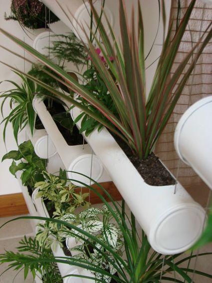 le rideau végétal, mur végétalisé interieur exterieur Sukulent