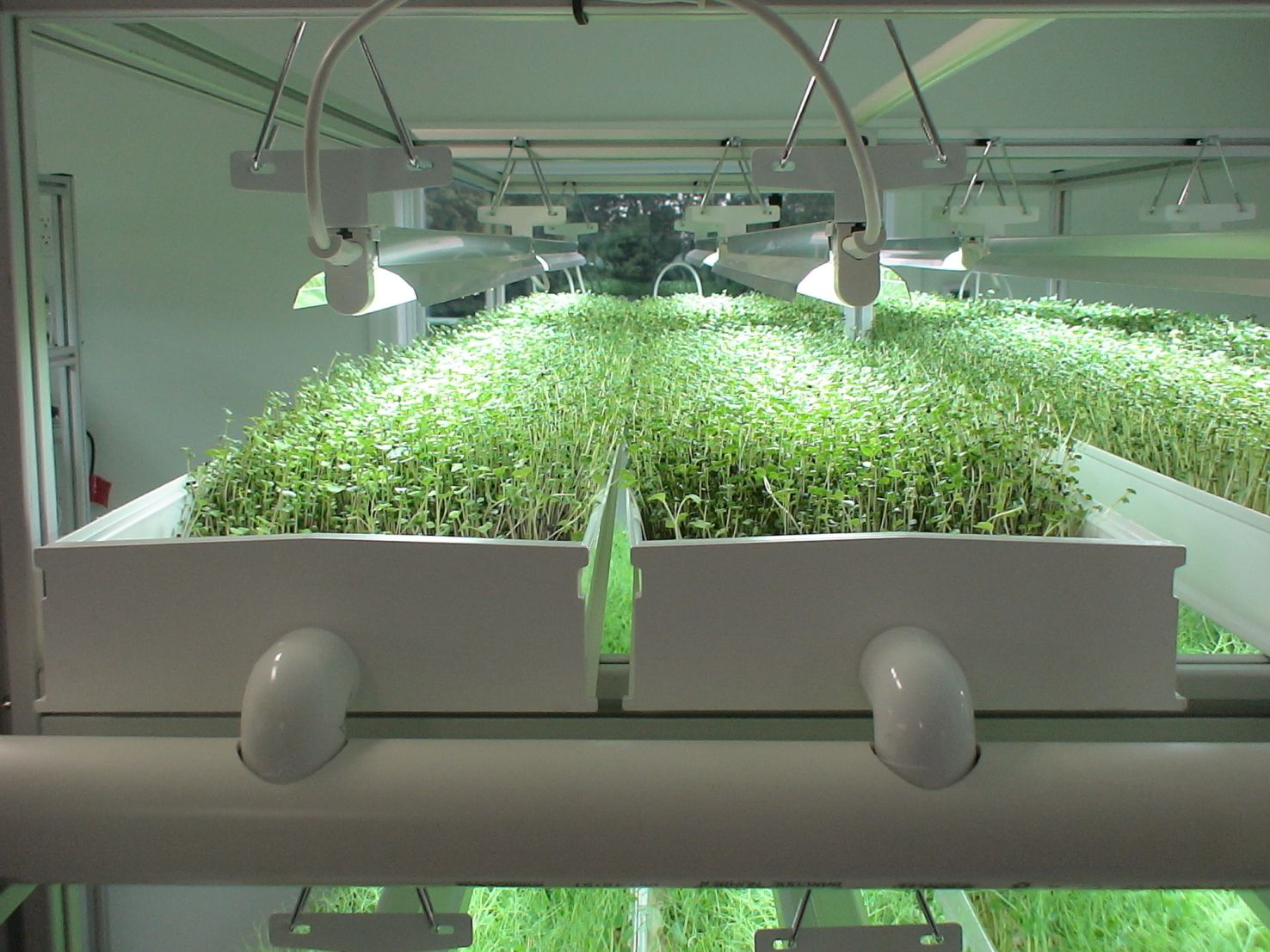 Growing microgreens in an NFT hydroponic system | E Gardens