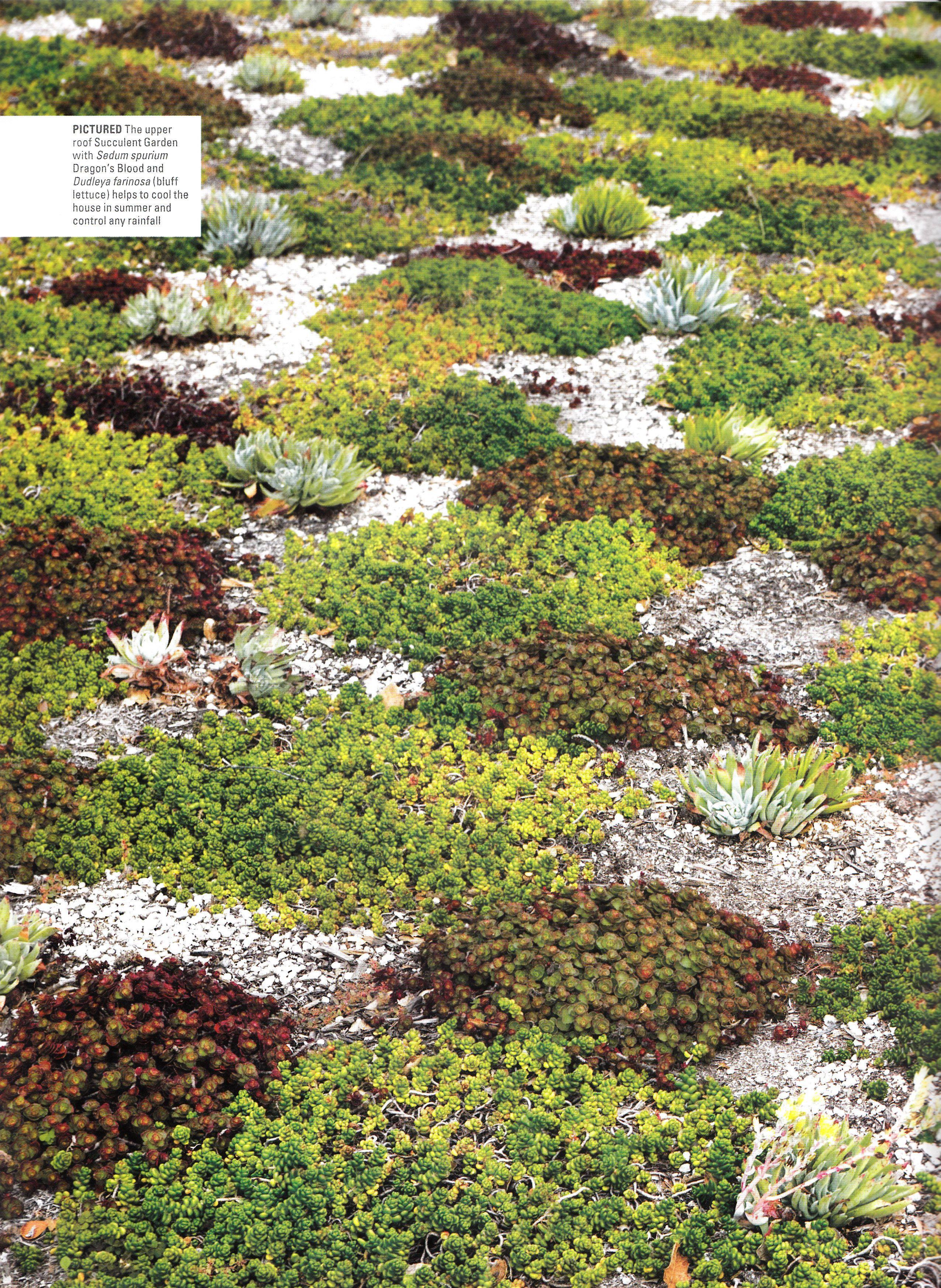 Sedum On Green Roof Garden Design Pictures Sedum Garden Roof Garden