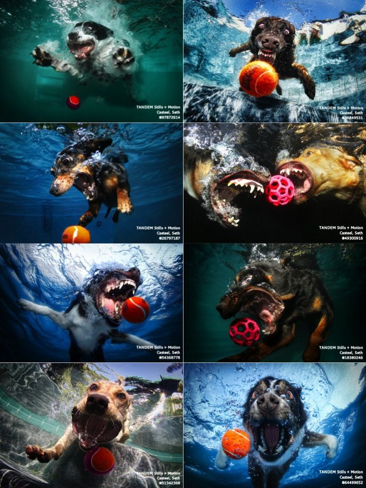 Happy Friday Terrifying Images Of Dogs Diving Underwater Funny Dog Pictures Animal Photography Underwater Dogs
