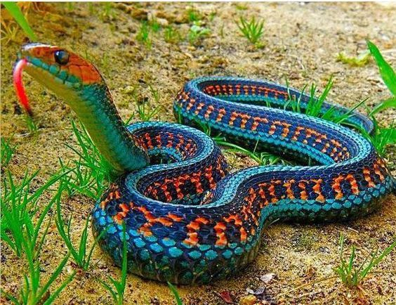 The Snakes With Rainbow Color Patterns Snake Beautiful Snakes Cool Snakes