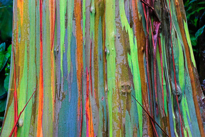 Peeling Bark St Lucia By Chester Williams Acrylic Prints Art