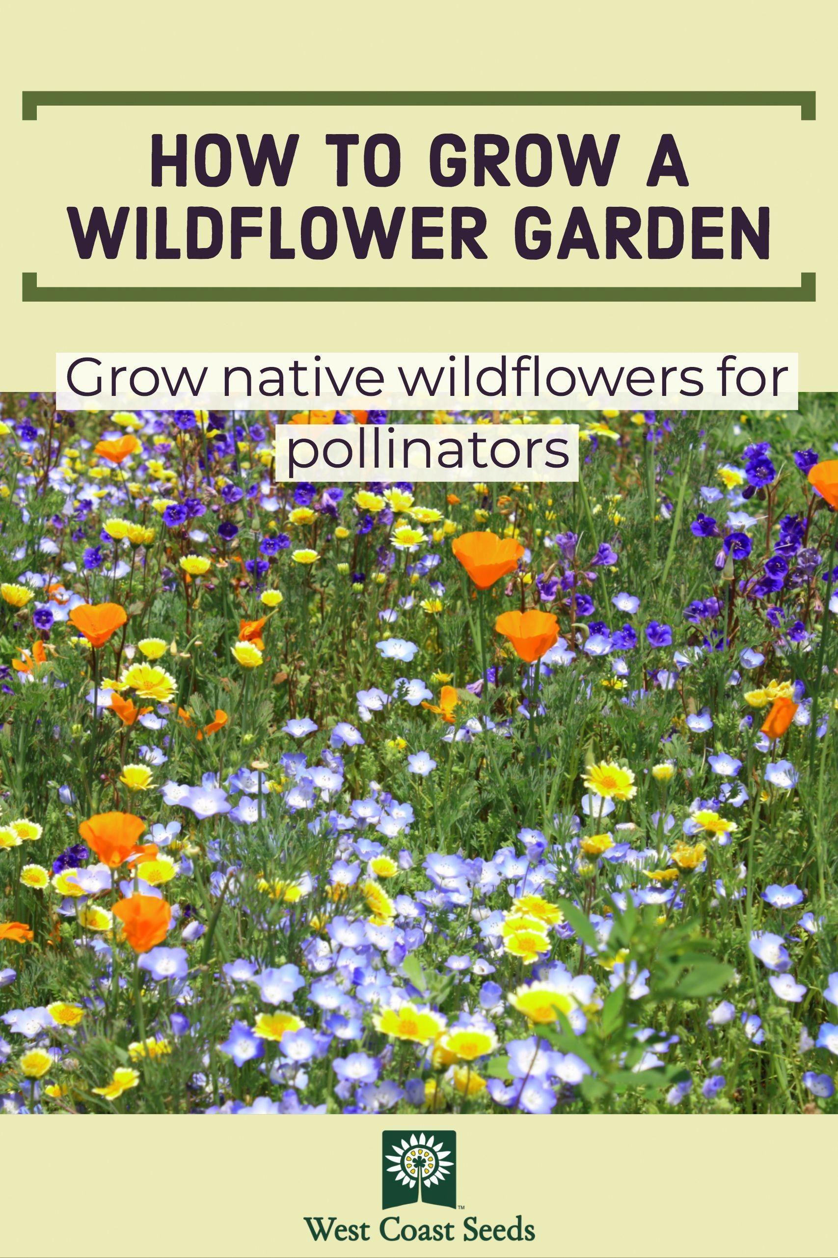 Learn how to grow native wildflowers in your organic garden ... on small garden design, wild garden design, cactus garden design, sand design, organic garden design, gravel design, herb garden design,