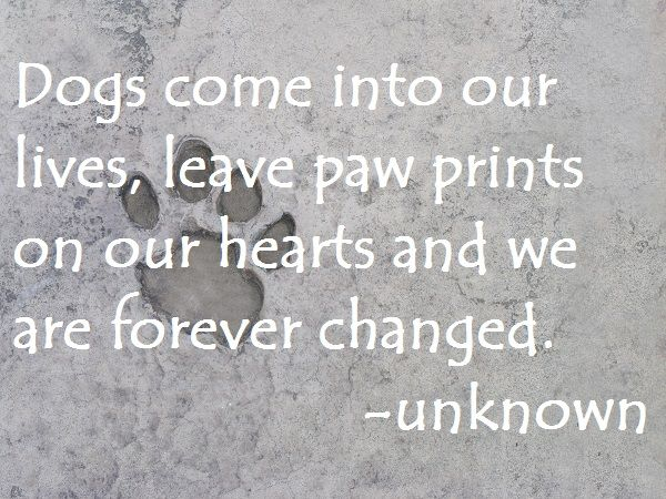 Dogs Come Into Our Lives Leave Paw Prints On Our Hearts And We Are