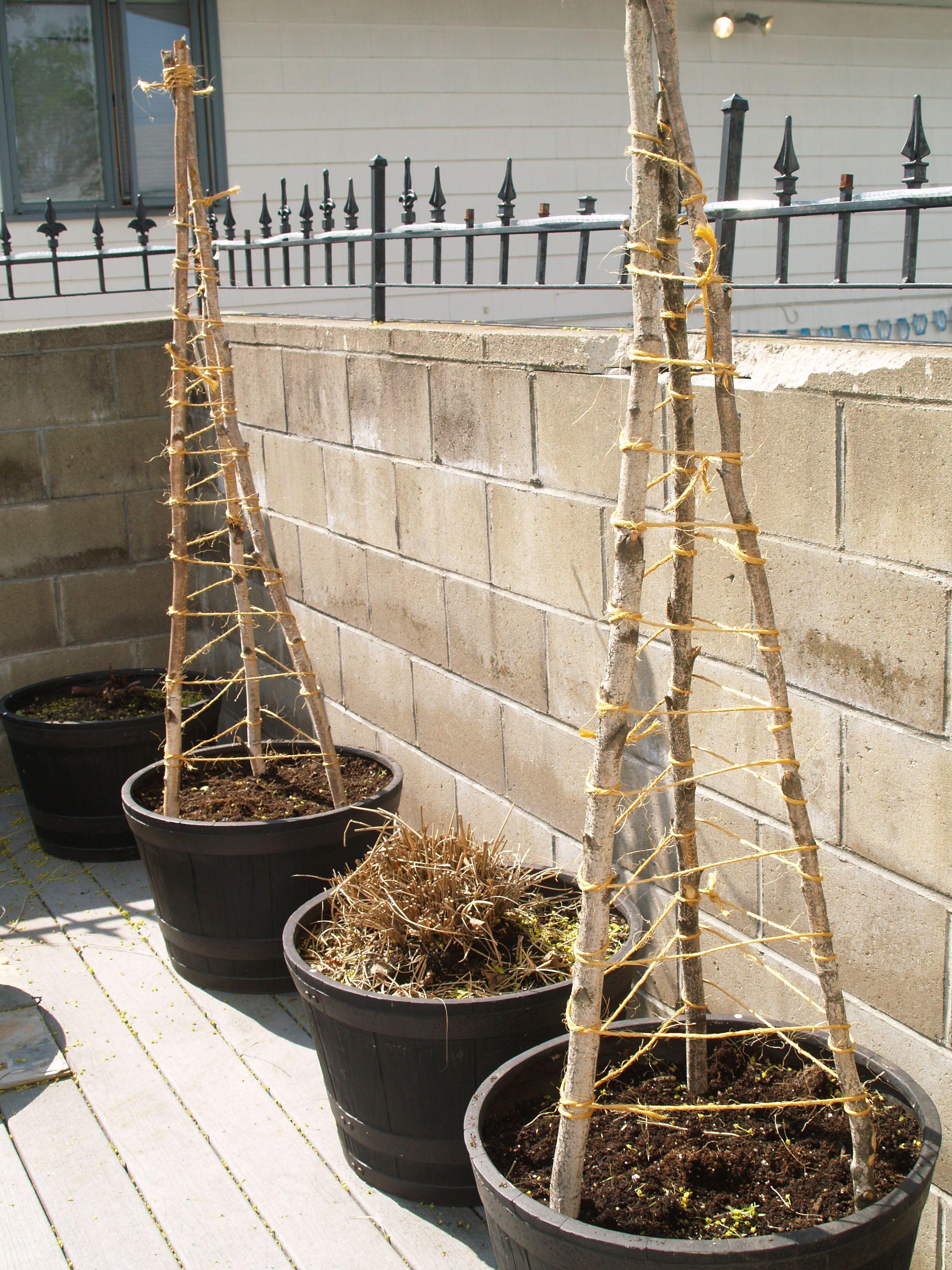building a cucumber trellis | Gärten, Gardening und Bauen mit holz