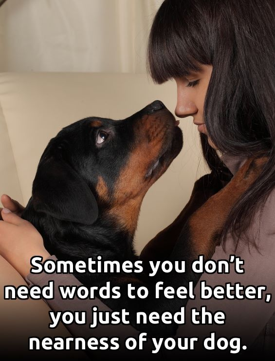 This Has Been Very Helpful Lately I D Be Lost Without Luna Https Www Facebook Com The K9 Instinct Photos A 51999711469958 Dogs Losing A Dog Rottweiler Love