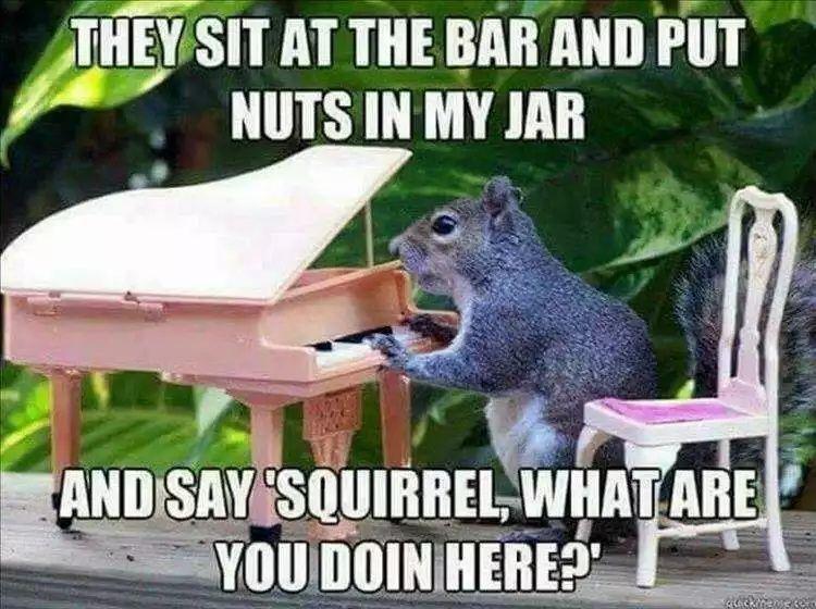 Top 20 Funny Animal Meme Pics Of The Day Animal Memes Funny Animal Pictures Funny Animals