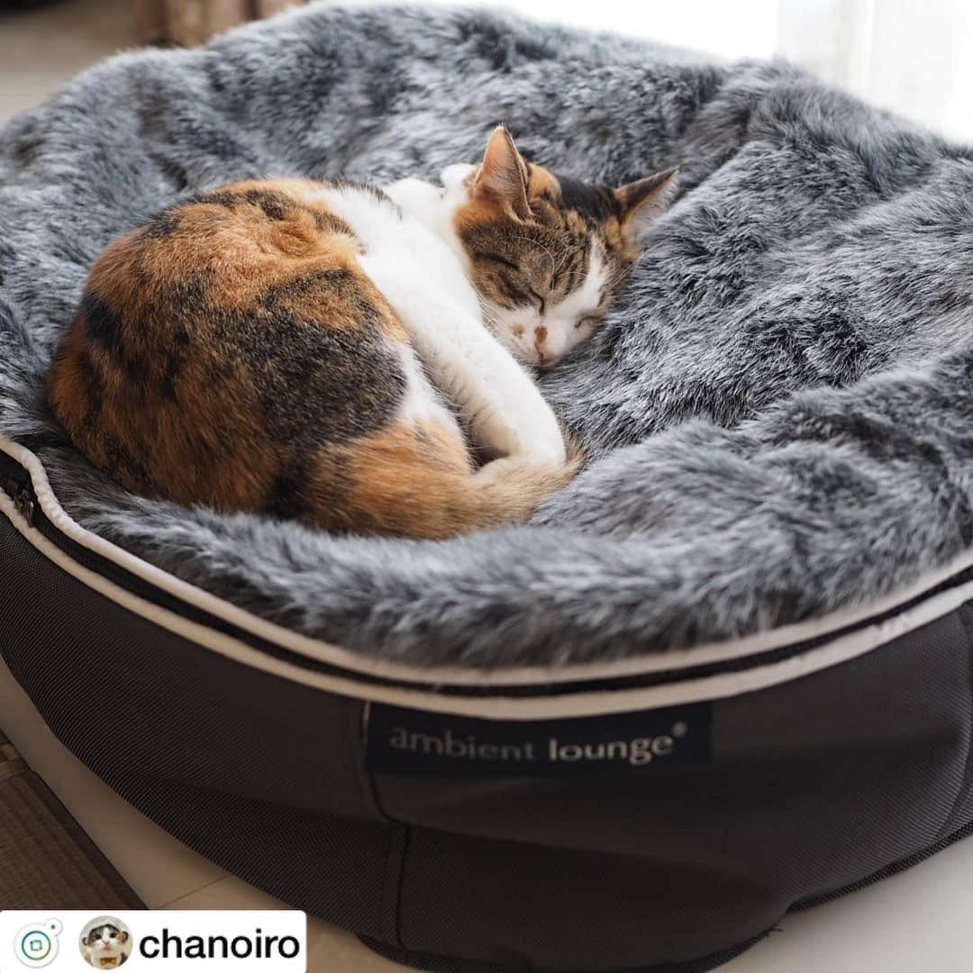 あなたの大切なペットに快適な眠りを叶えよう Chanoiro 様の猫ちゃんより Ambientloungejp アンビエントラウンジ Ambientlounge ペット ペットベッド 犬ベッド インテリア 愛犬 ビーズクッション Cats Washing Machine Animals