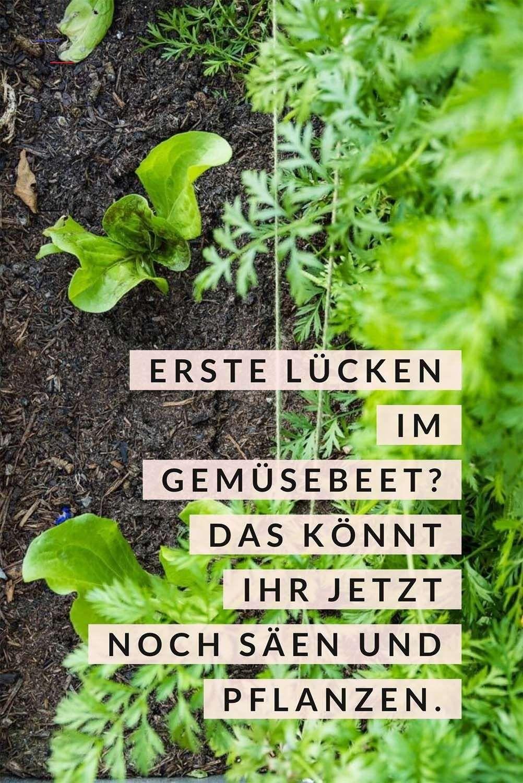 27++ Gemuesegarten im april pflanzen Trends
