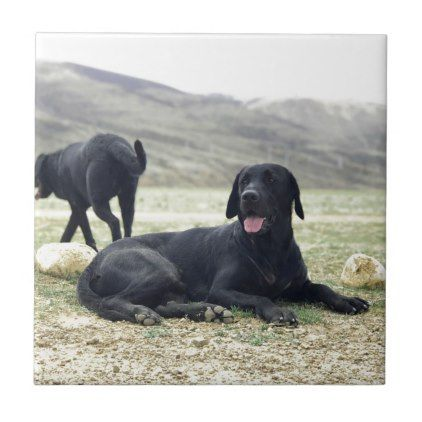 Customizable Black Labrador Retriever Tile Labrador Retriever Puppy Labradors Dog Dogs Pet Pe Labrador Retriever Labrador Labrador Retriever Puppies