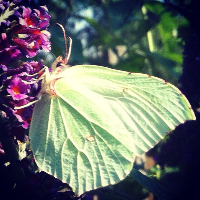 Butterfly @ pic Betty Mans