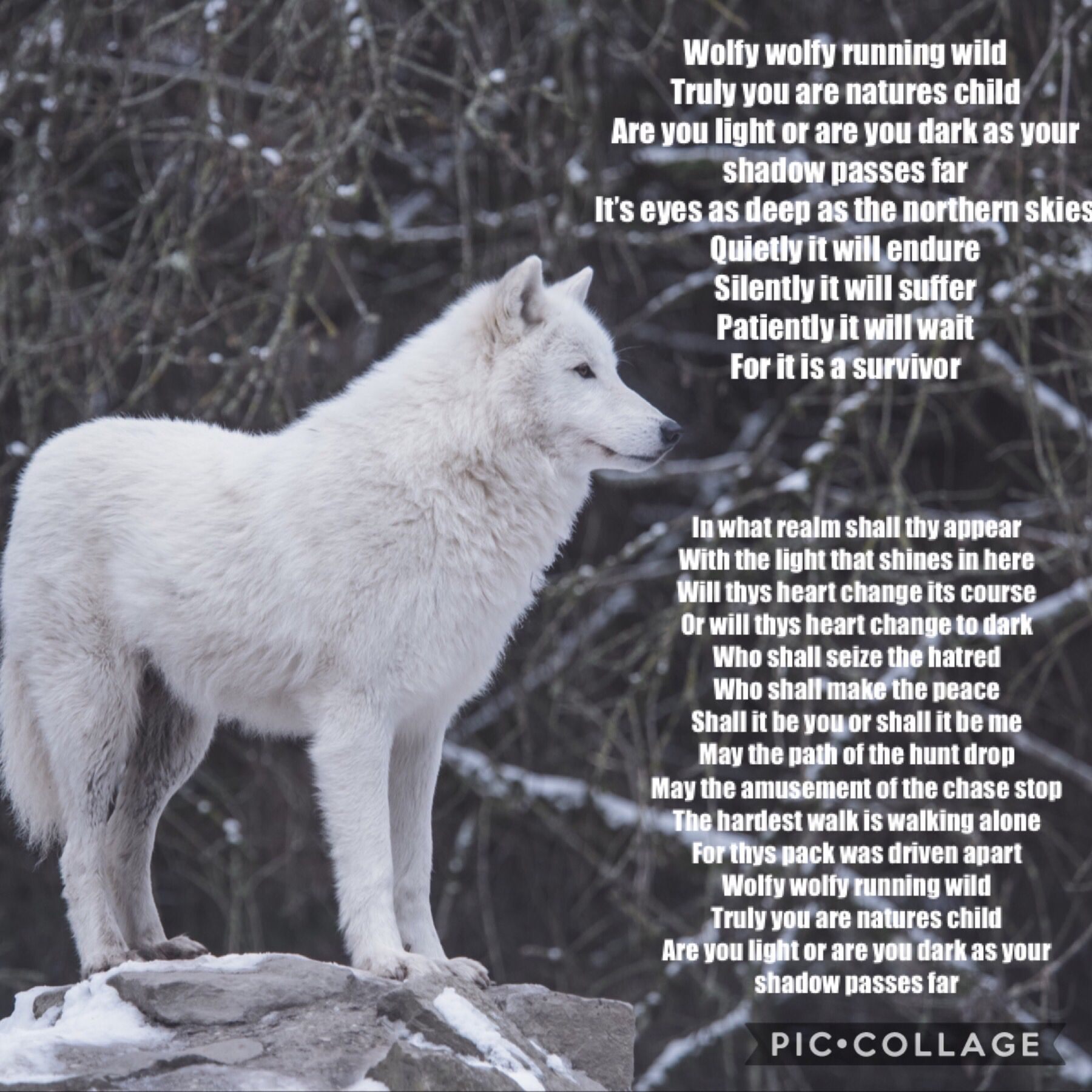 A Lovely Poem By My 12 Year Old Daughter Doglovers Wolf